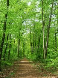 En grön käftsmäll som bara blåste förbi eller bristen på mindfulness